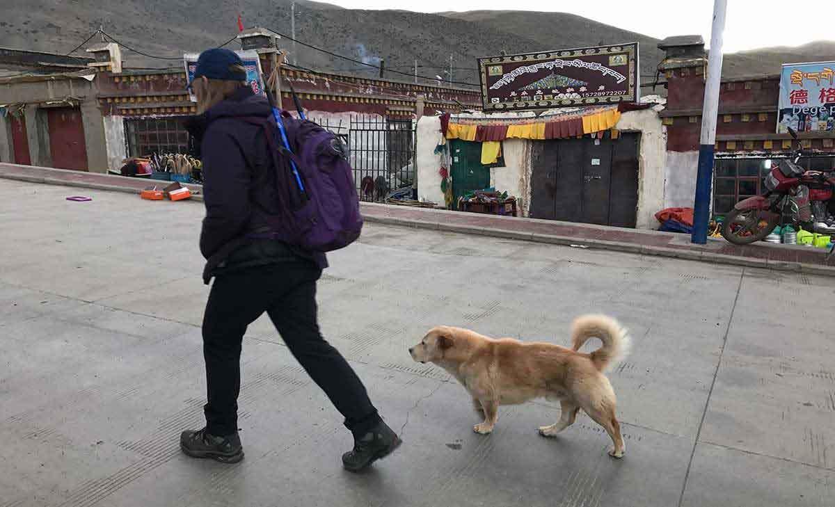 Kailash Trek Darchen Dog