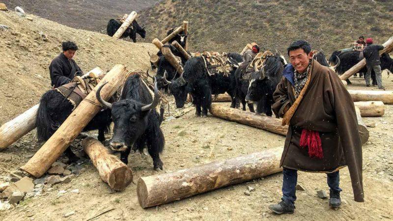 Visiting Tibet: yaks and yakmen in Kham